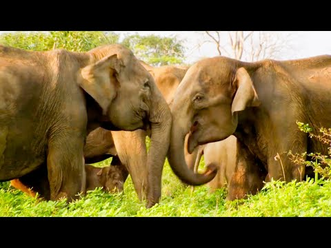 The Cutest Elephant Moments | Top 5 | BBC Earth