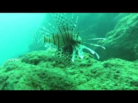 Aquacreed Scuba Down At fraggle Rock