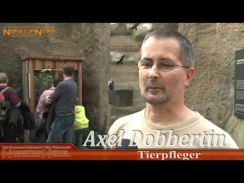 Rostock: Zoo Rostock - Sensation im Rostocker Zoo - Zweiköpfige Schlange ist Publikumsmagnet