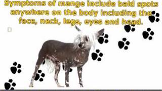 Dog Skin Diseases: Prevention Is Better Than Cure!
