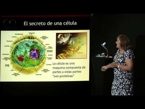 Epigenética. Una señal del ambiente controla el trabajo biológico. Por Dra. Marianela Castés Boscán