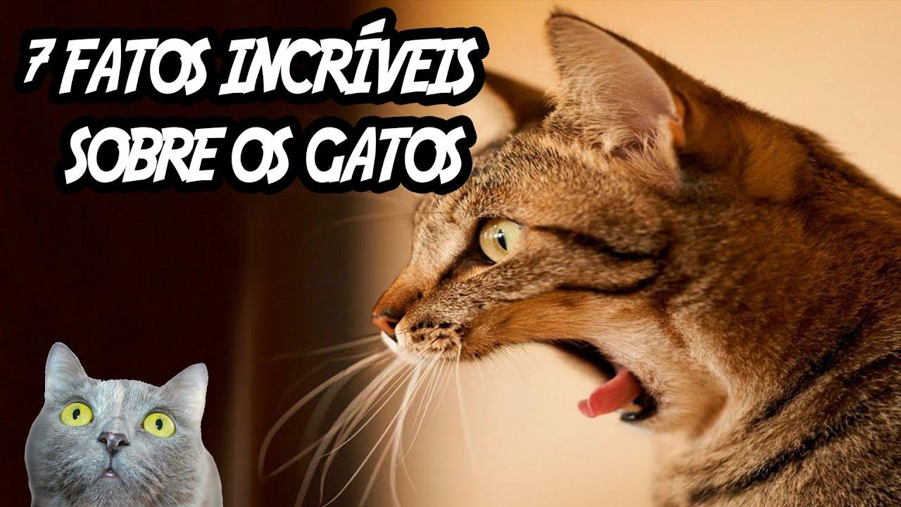 7 fatos incríveis que você não sabia sobre os gatos