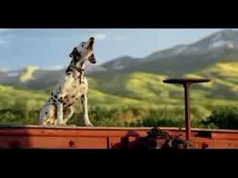 Budweiser: Horse Training