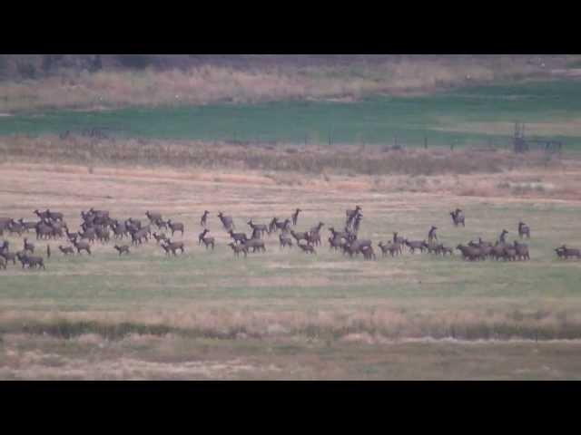 2013 Elk Video - 1