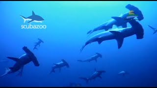 Scuba Diving Malaysia - Avillion Layang Layang Island Resort