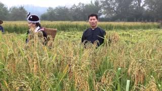 Xiong Family Union-hlais nplej