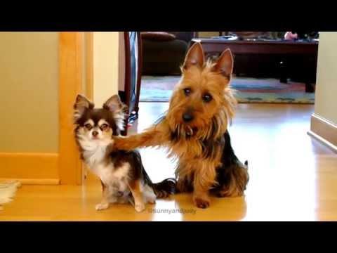 chiede quale sia il responsabile tra i due cani: guardate cosa accade!