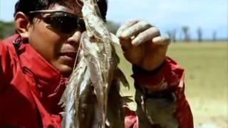 Video Jejak Petualang Survival - Migrasi Satwa MP3, 3GP, MP4, WEBM, AVI, FLV Maret 2019