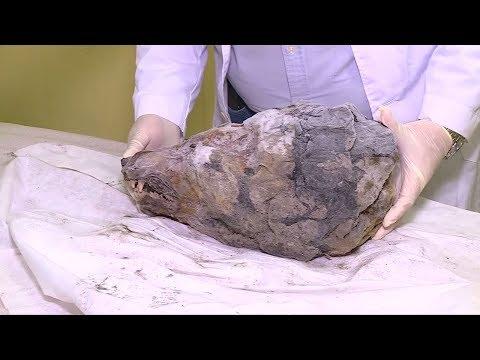 Sibirien: Kopf eines riesigen Eiszeit-Wolfs entdeckt