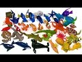 Learn Sea Animal Names Shark Whale Fish Turtles Finding