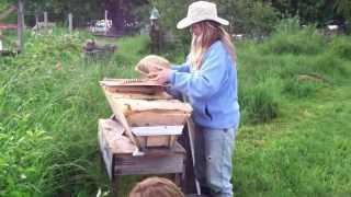 Moving Bees Into Their New Home
