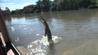 Darwin Jumping Croc Cruise