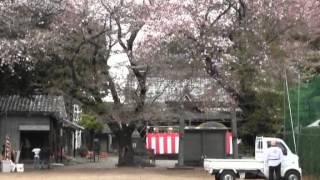 五郎丸神明社・太大神楽1・境内準備