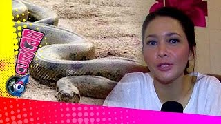 Video Ular-ular Misterius di Rumah Maia - Cumicam 02 Juni 2015 MP3, 3GP, MP4, WEBM, AVI, FLV Januari 2019