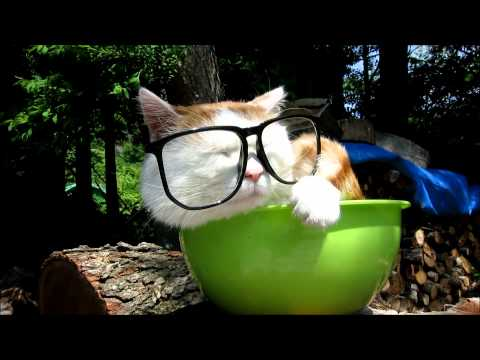Cute cat wearing glasses in a bowl