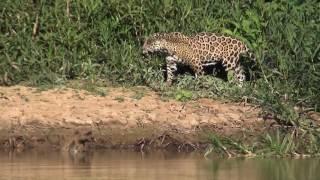 Pantanal Photography Safari Trip 2016