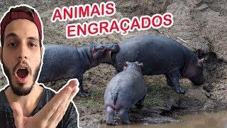 Fotos engraçadas - ANIMAIS MAIS ENGRAÇADOS, OU NÃO