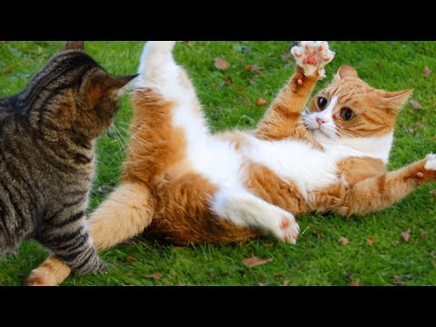 🤣 Funniest 🐶 Dogs and 😻 Cats - Awesome Funny Home Animal Videos 😇