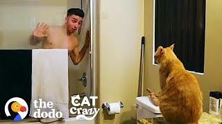 Every Cat Parent… | The Dodo Cat Crazy by The Dodo