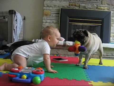 Pug vs. Baby – the neverending battle.