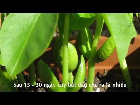 Báo ứng hiện đời - Tập 1/ 2 - Chua Hoang Phap