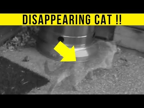 5 Animal Teleportations Caught On Camera & Spotted In Real Life!