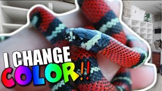 SNAKES OF THE FUTURE!! MY SNAKE BREEDERS ARE INSANE!! Brian Barczyk by Brian Barczyk