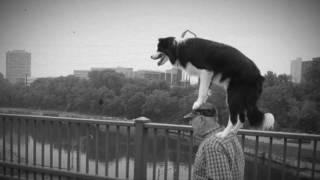 Video Ukulele Jack - Skákal pes a hrál jazz