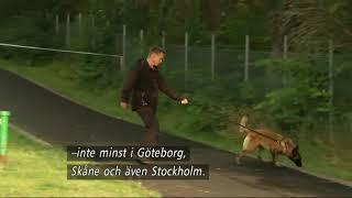 Nyheterna i TV4 från 2017-08-20: Liberalerna vill kalla rikspolischef Dan Eliasson till riksdagens justitieutskott för en utfrågning...