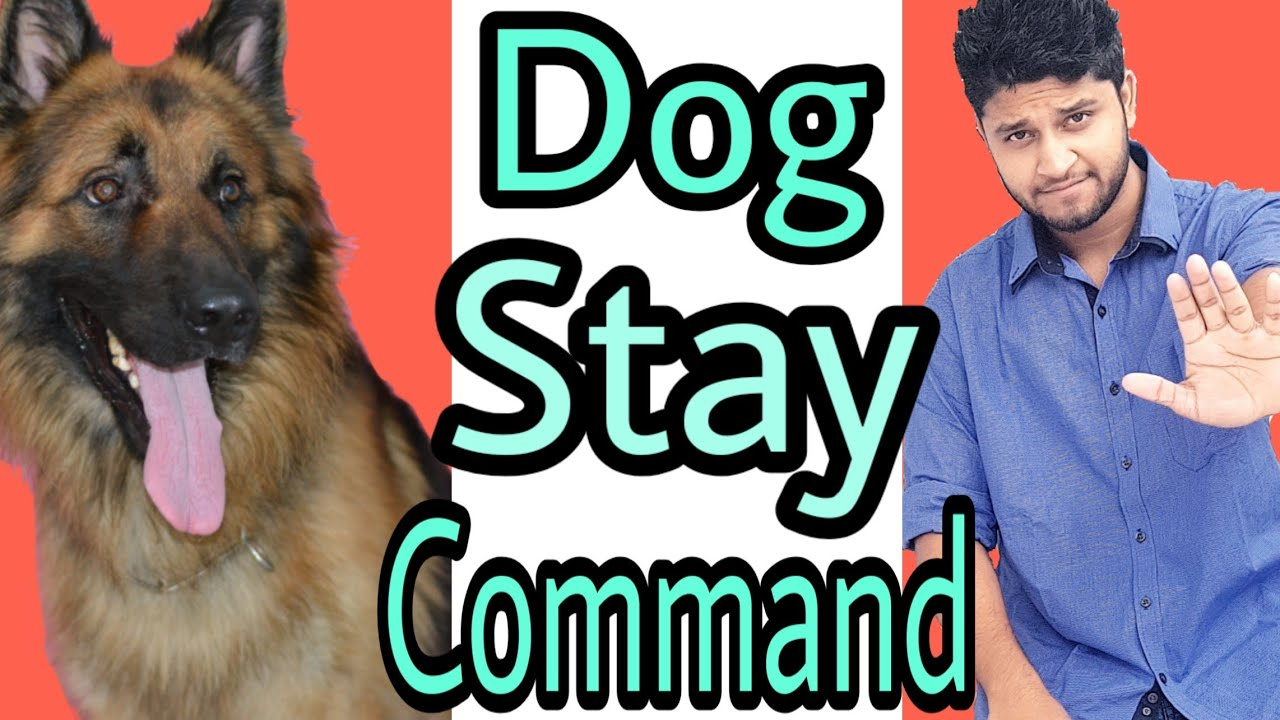How to train your dog to stay in hindi : dog training in hindi