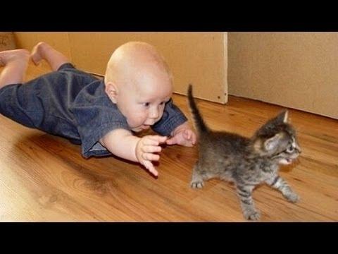 compilation di gatti e bambini che giocano insieme!