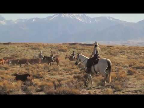 USA - séjour au  Ranch des Bisons
