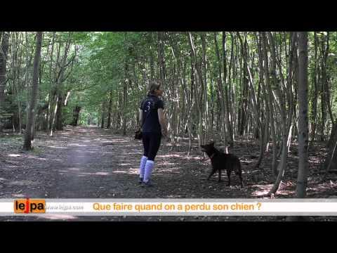 comment localiser un chien avec sa puce