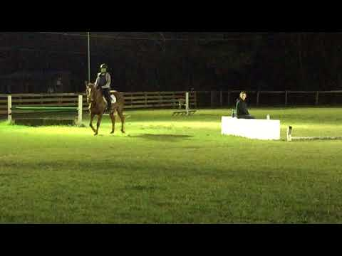 Horses, Horseback riding, Orlando, Florida