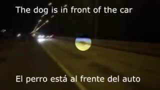 Pies znika przed samochodem .
