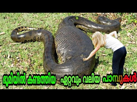 Top 5 Largest and Longest Snakes in The World | Malayalam | KrishnaSagar