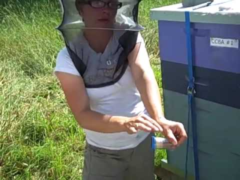 Marking a Queen Bee – Erin MacGregor-Forbes of Overland Apiaries