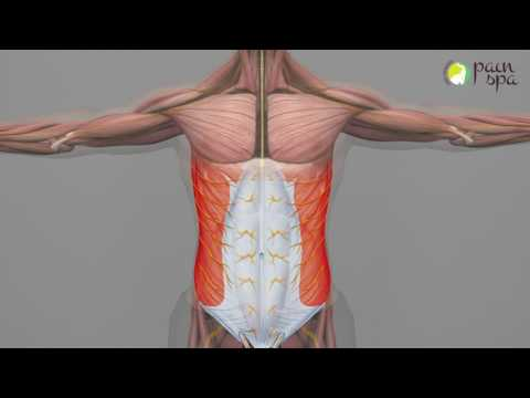 Chronic Abdominal Wall pain & Abdominal Cutaneous Nerve Entrapment Syndrome (ACNES)