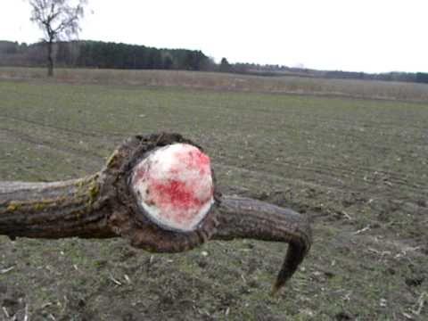 Zrzuty jelenia dwunastak z 10 marca 2011r.