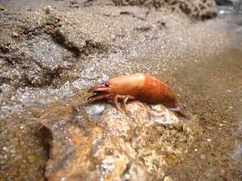 Sri Lanka,ශ්රී ලංකා,Ceylon,Shrimp,River,Jungle