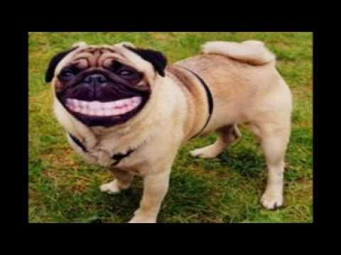 Funny Animals2