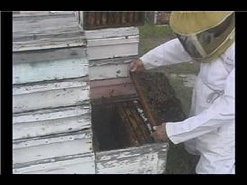 Beekeeping Basics : Beekeeping: Starting a Beehive