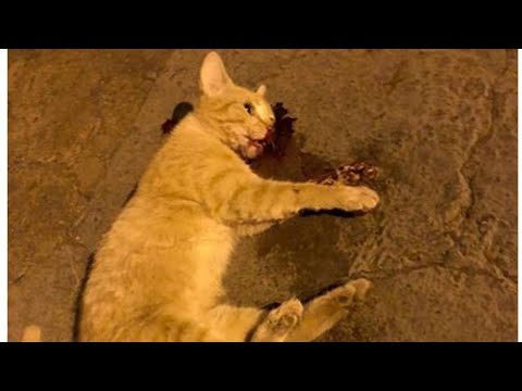 meu gato morreu
