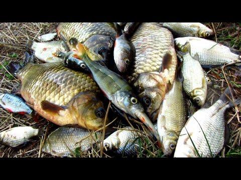 отдых рыбалка уха шашлык