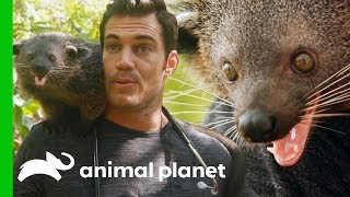 Dr. Evan Antin Bonds with an Incredibly Friendly Palawan Bearcat | Evan Goes Wild by Animal Planet