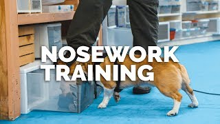 Video Nosework Training with Andrew Ramsey: First Look MP3, 3GP, MP4, WEBM, AVI, FLV Juli 2017