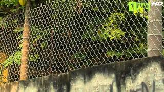 Phong thủy cho hàng rào nhà (p2)