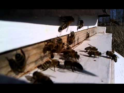 Beekeeping. Milner Meadow Apiary . Febuary 20th 2011