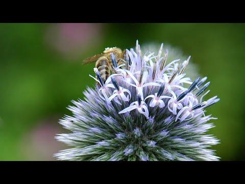 Vier Tipps, wie aus Ihrem Garten ein Zuhause für Inse ...