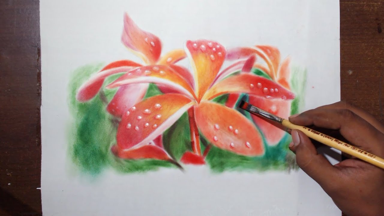 Plumeria Flower Drawing Tutorial by fadil